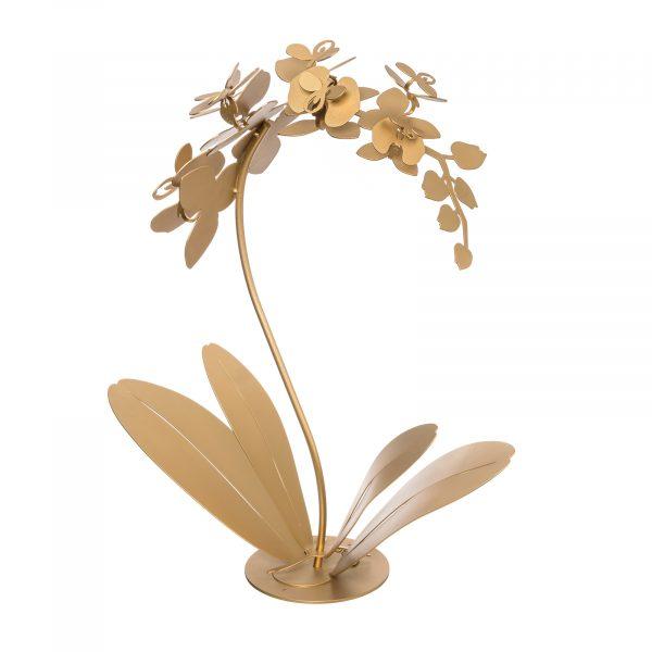 Pianta da soggiorno decorativa Orchidea